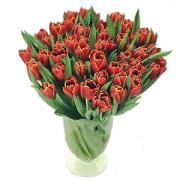 35 червоних тюльпанів 2