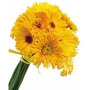 Жовті гербери як промінчик Сонця